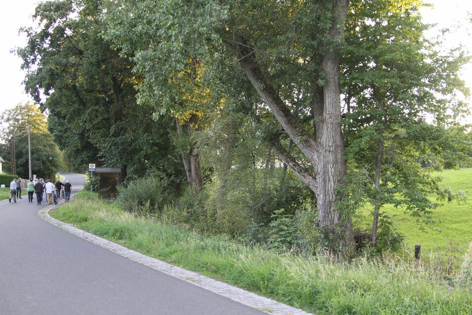 Dieser Baum in Gersdorf steht offenbar nicht mehr sicher. Er soll weiter beobachtet werden.