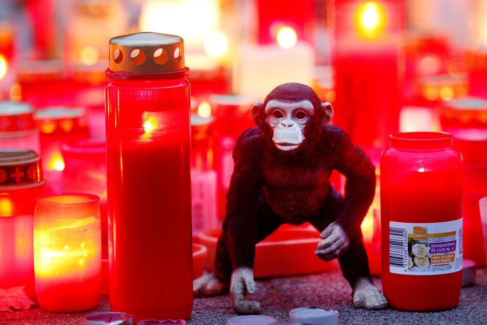 Bei dem Brand des Affenhauses im Krefelder Zoo starben etliche Tiere.