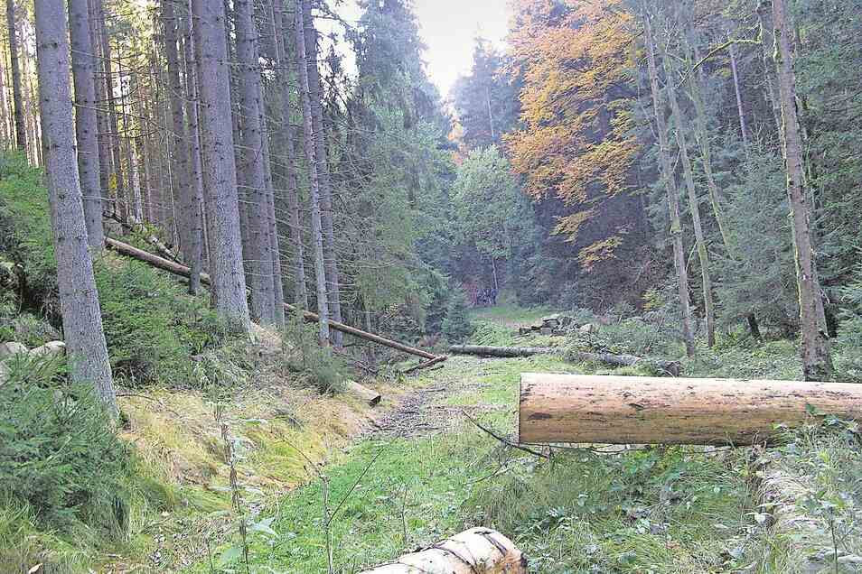Würde hier wieder eine Brücke errichtet, könnten Wanderer bequem zum Beispiel die Obere Schleuse in Hinterhermsdorf ansteuern.