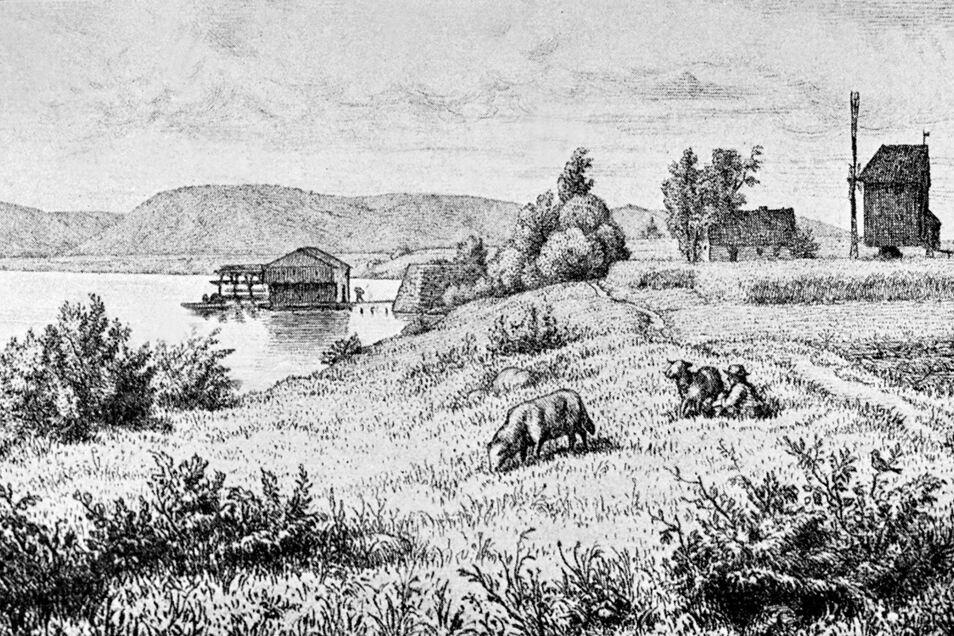 Windmühle am Elbufer und Schiffsmühle in der Elbe in Coswig-Kötitz, im Hintergrund die Bosel, aus dem Bilder-Atlas zur sächsischen Geschichte von 1909. Foto: Deutsche Fotothek