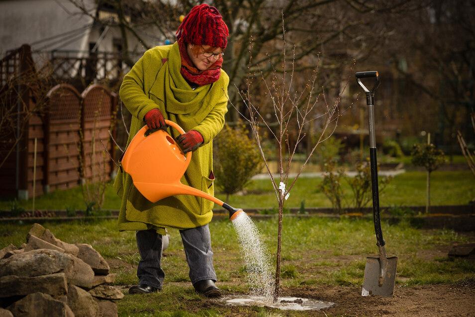 Katrin Keiner in ihrem Garten in Dresden: Damit ihre Sauerkirsche anwächst, muss sie intensiv gegossen werden.