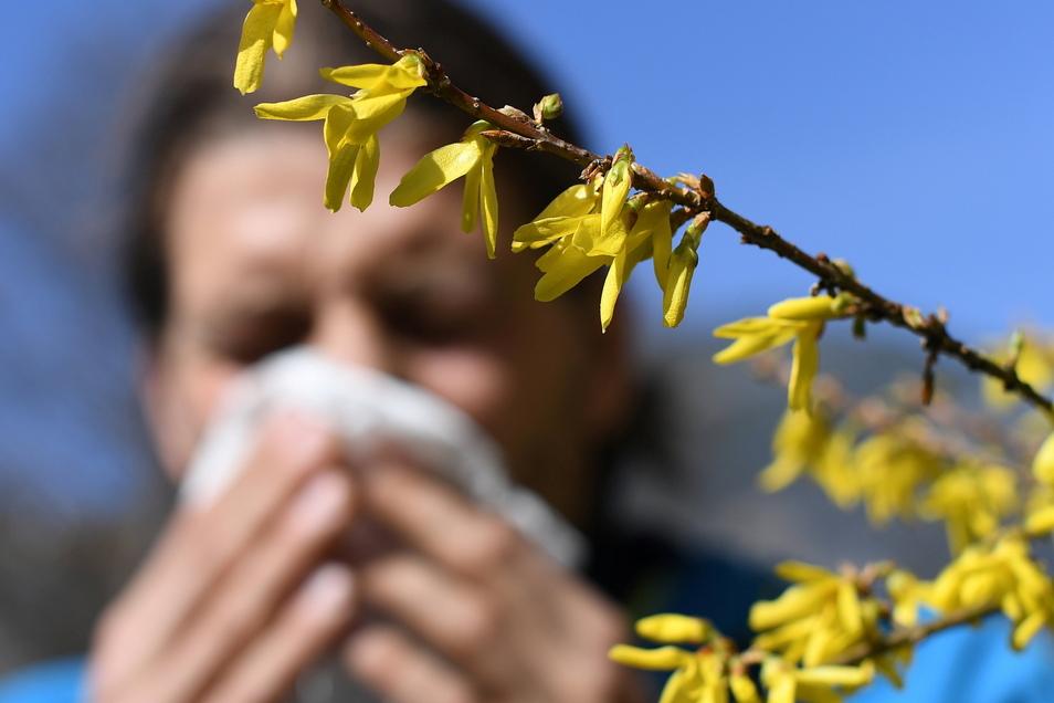 Die Pollen fliegen wieder - Corona-Masken können Symptome mildern.