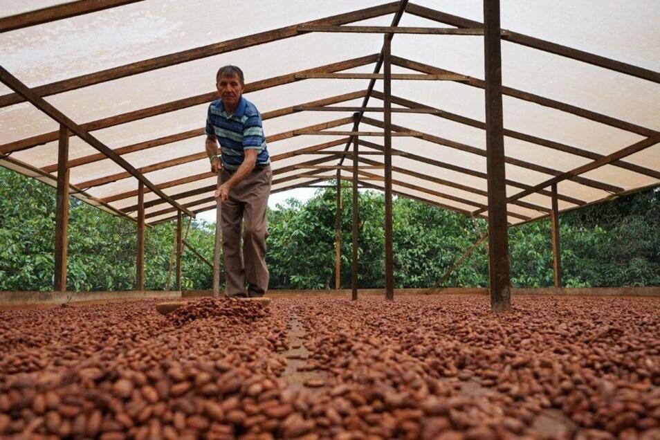 Kakaobauer Darcirio Vronski (l.) beim Trocknen der Früchte