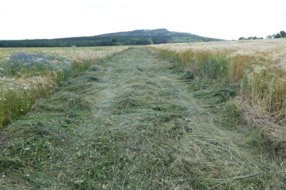 Mahdgut wird von geeigneten, artenreichen Wiesen gewonnen und auf dem vorbereiteten Saatbeet ausgebracht.