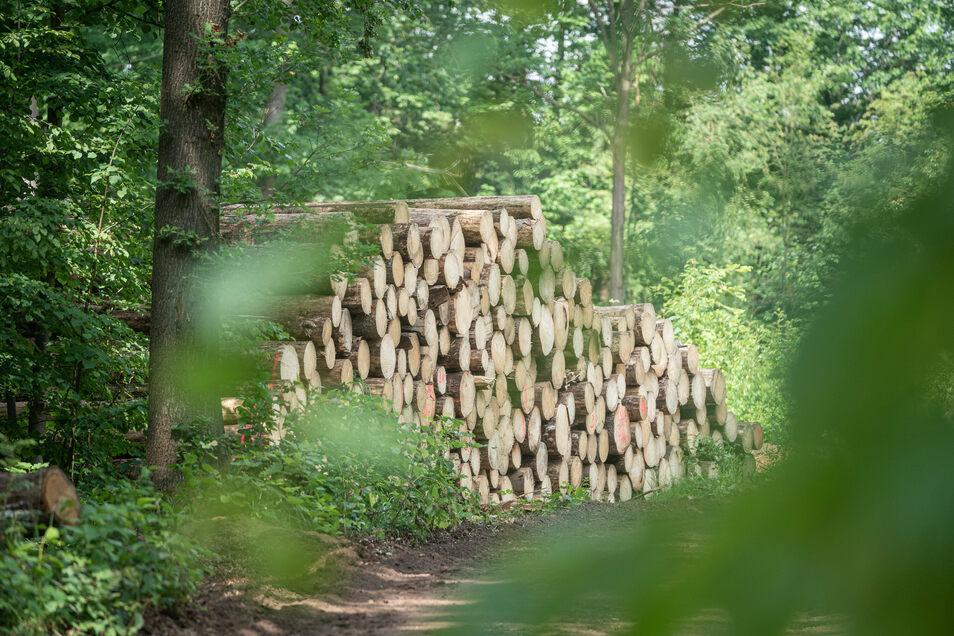 Es wird viel mehr abgeholzt als gewöhnlich. Eine Schritt um den Wald zu retten.
