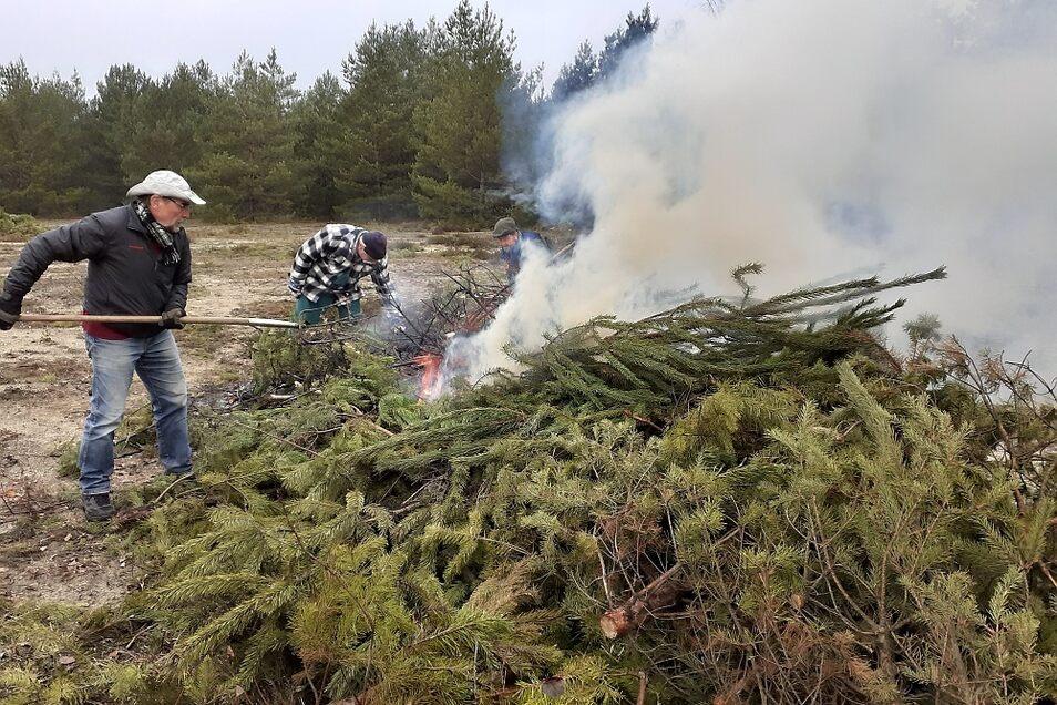 Die Fläche der Kippe Lohsa wurde gründlich von Gestrüpp und Wildwuchs befreit, um auf diese Weise eine offene Fläche für seltene Tiere und Pflanzen zu schaffen. Kameraden der Feuerwehr überwachten das Verbrennen.