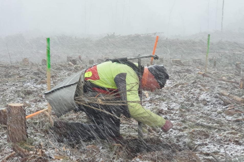 Unter widrigen Bedingungen hatte Forstwirtschaftsmeister Steffen Pritzke Anfang April eine Hecke bei Steinbach gepflanzt.