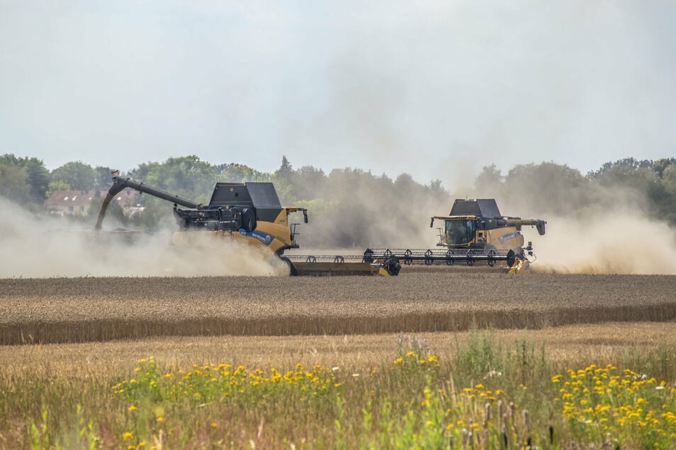 Die Getreideernte zwischen Rothenburg und Nieder Seifersdorf läuft derzeit auf Hochtouren. Die Erträge versprechen besser zu werden als noch vor einem Jahr.