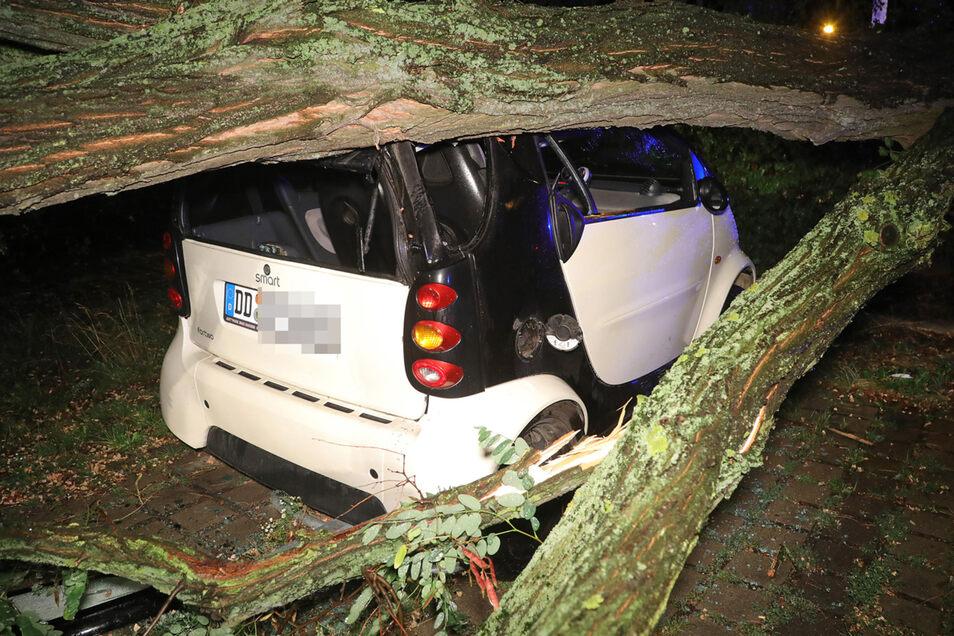 Dieser Smart wurde von einem umstürzenden Baum getroffen.