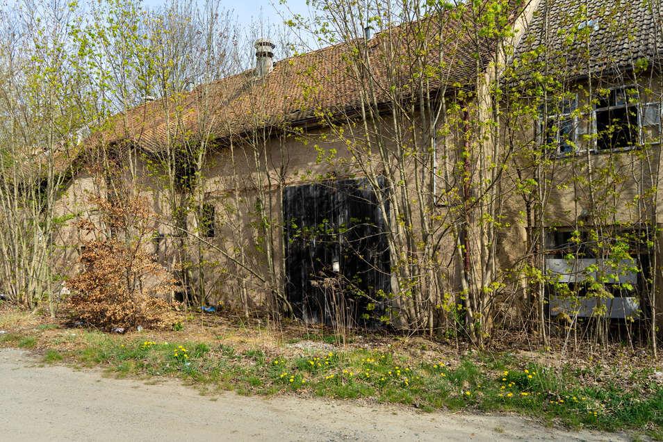 Wildwuchs überwuchert die Rückseite des einstigen Wohn- und Stallgebäudes. Im Inneren haben es sich Obdachlose gemütlich gemacht. Im Stallgebäude stapeln sich Styropor und Asbest.