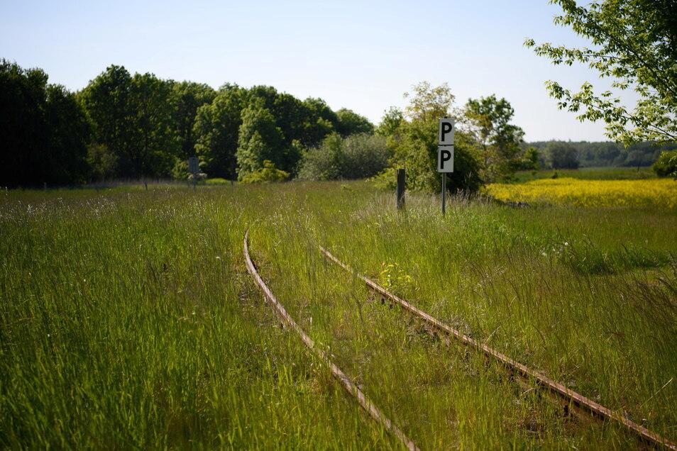 Vom Gras überwachsene Gleise einer früheren Regionalbahn der Strecke Pritzwalk - Suckow mit Haltepunkt Kuhbier.