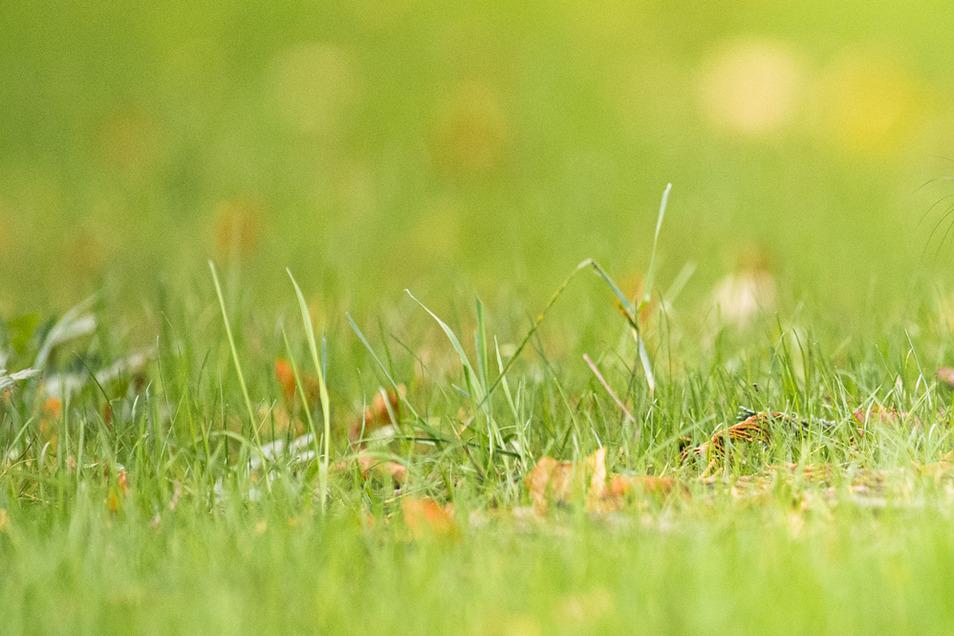 Für ein eine Quadratmeter großes Stück Rasen müssen bei einer Auktion mindestens 175.000 Euro gezahlt werden.