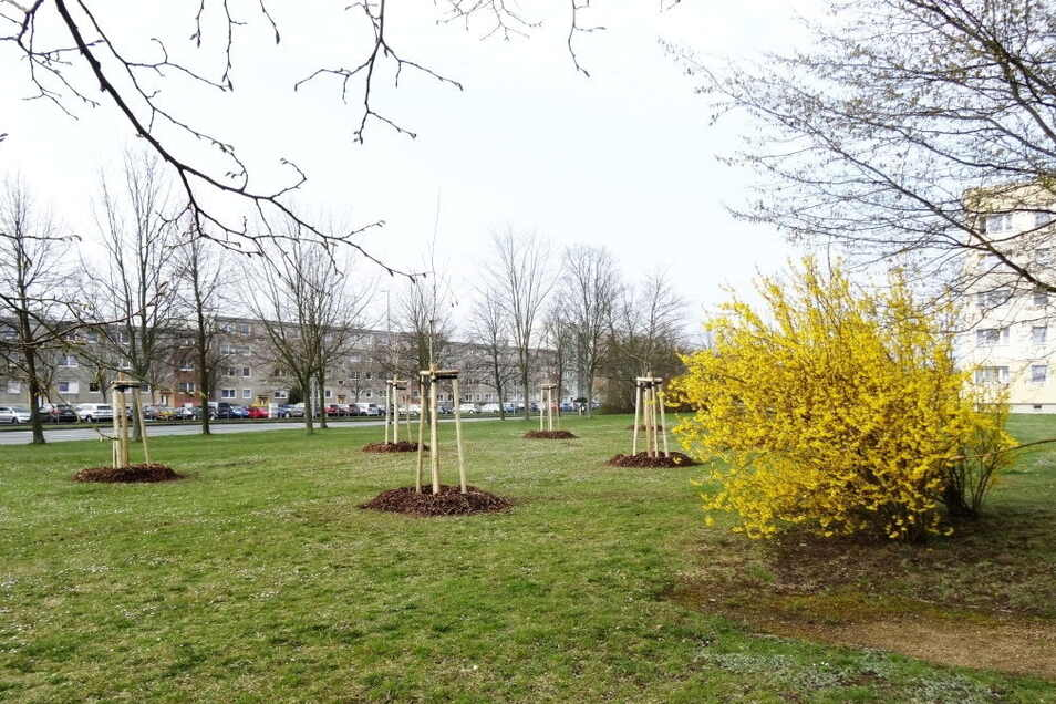 Die Großvermieter pflanzen immer wieder Bäume und Sträucher in Königshufen - so wie Kommwohnen im April an der Schlesischen Straße.
