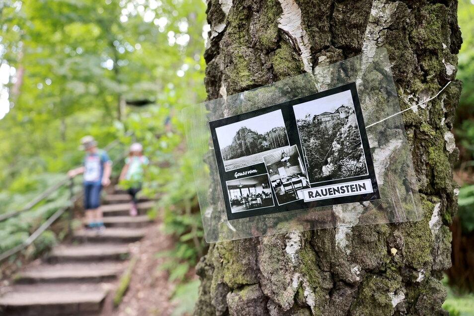 Geschichte am Baum: So wird der Aufstieg zum Rauenstein zur Zeitreise.