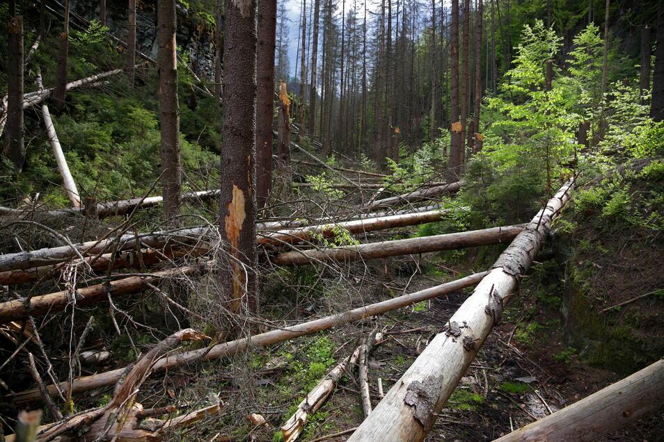 Die Richterschlüchte nahe der tschechischen Grenze: einer der unpassierbaren Wege im Nationalpark Sächsische Schweiz.