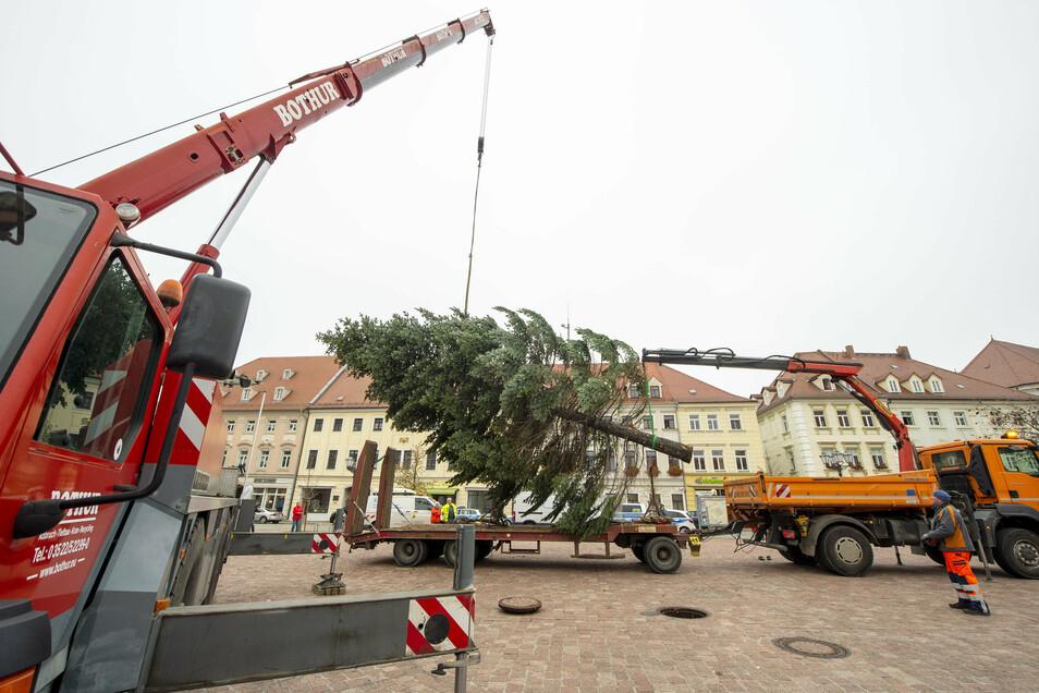 Mit viel Feingefühl wurde der Baum vom Transportgefährt in seine endgültige Position gehievt.
