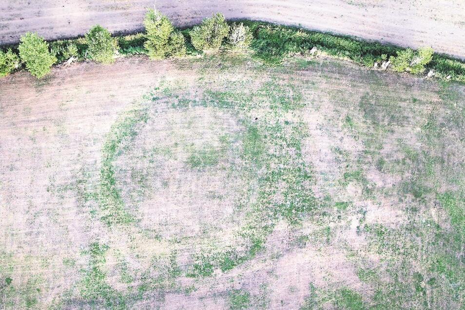 Auf der diesjährigen Luftbildaufnahme ist die Baudaer Wasserburg als Ring in der Wiese zu sehen.