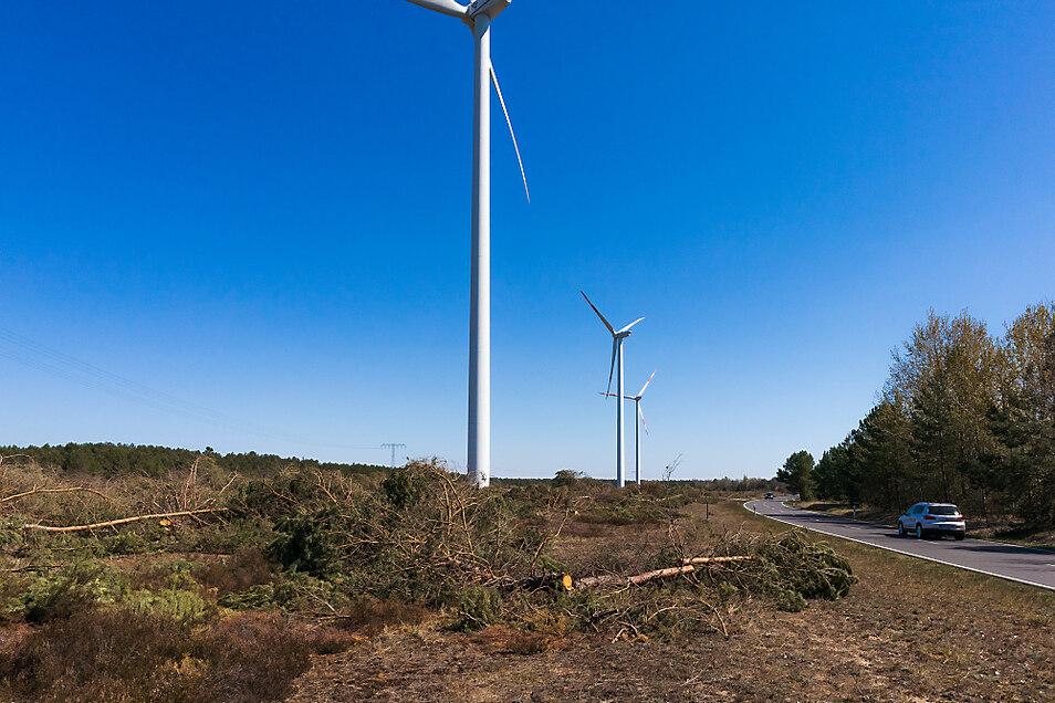 Für die geplante Photovoltaik-Anlage am Scheibesee mussten bereits Bäumen weichen.