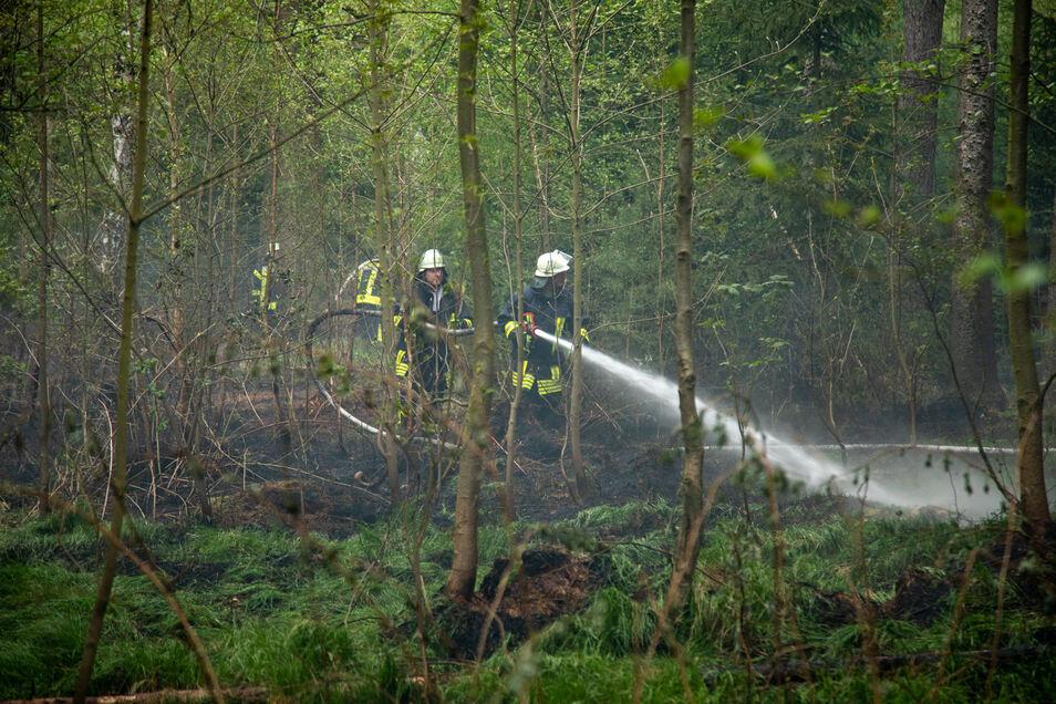 Am Dienstagabend hat es im Massenei-Wald zwischen Seeligstadt und Großröhrsdorf gebrannt.