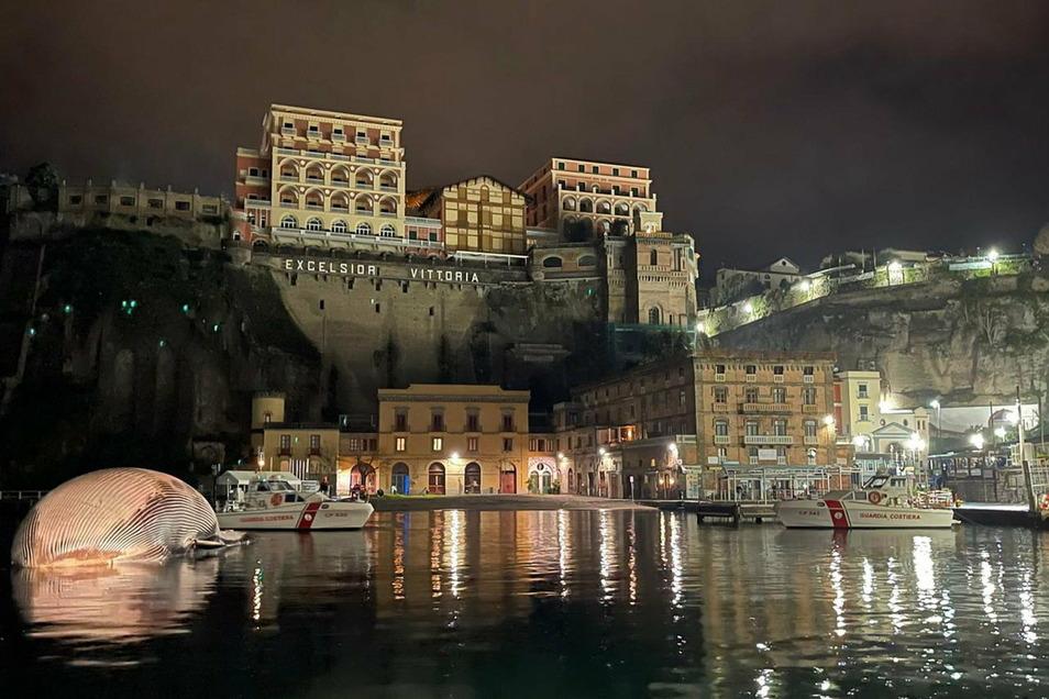 Italien, Sorrento: Der Kadaver des Riesenwals liegt im Hafenbecken von Sorrento.