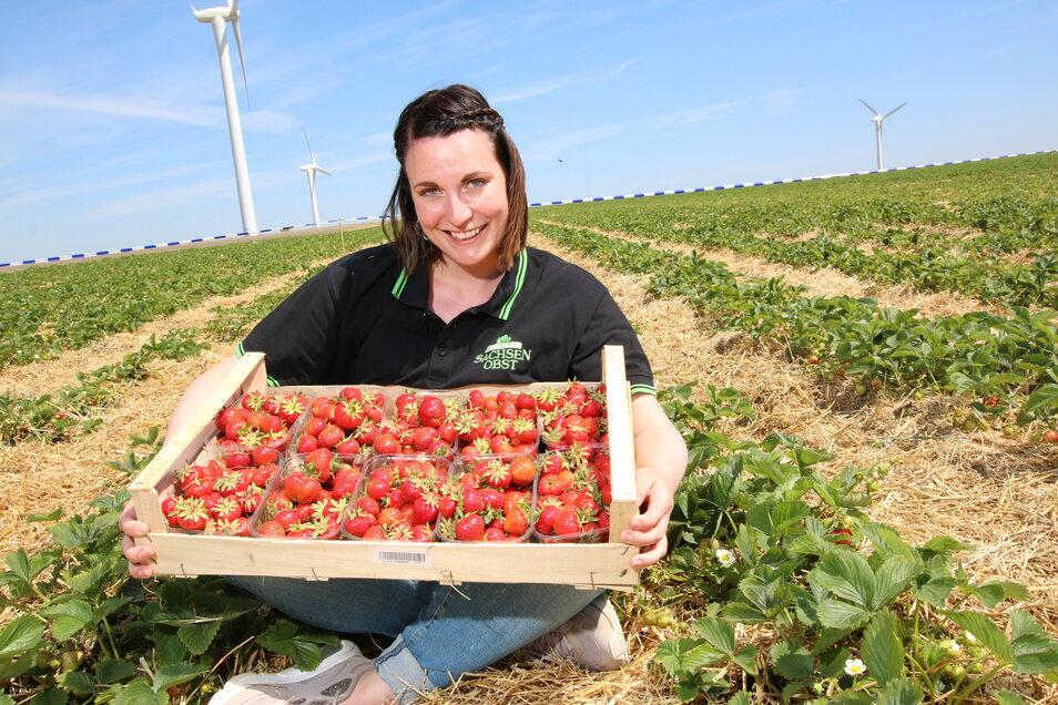 Auch Sophie Rost, Marketing-Leiterin bei der Obstland Dürrweitzschen AG, freut sich über die ersten roten, süßen Früchte in diesem Jahr..