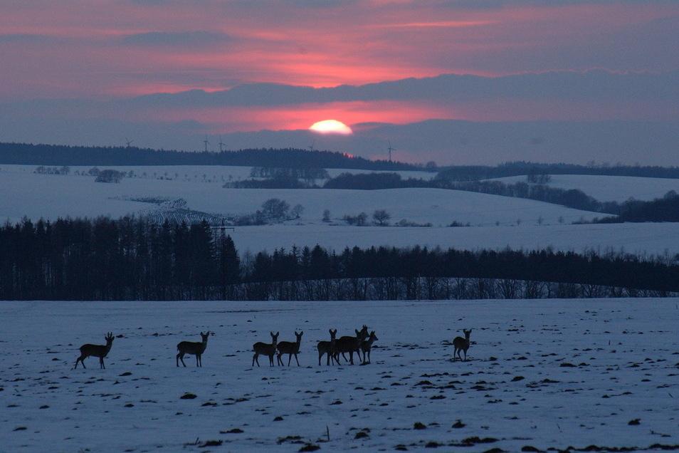 Die kälteste Nacht Sachsens maß der Deutsche Wetterdienst zwischen Dienstag und Mittwoch in Dippoldiswalde.