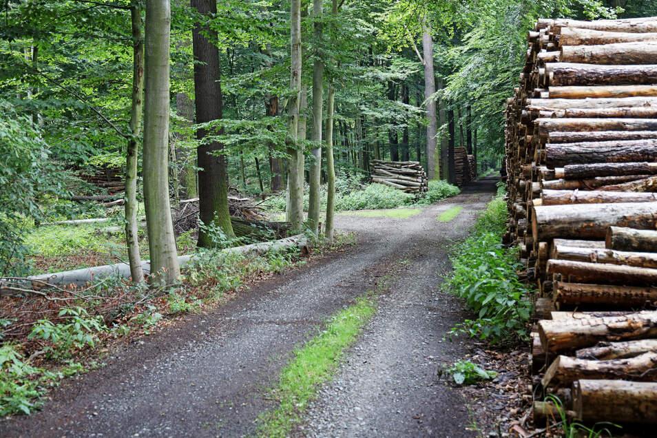 Blick in ein Waldstück zwischen Görzig und Pulsen. In dem unübersichtlichen Gelände endete die Fahrerflucht eines Mannes aus Gröditz.