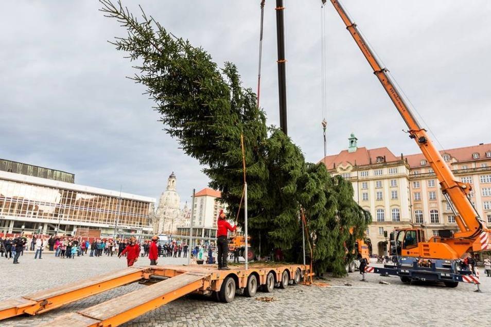 Die Fichte, die vor dem Fällen knapp 23 Meter hoch war, ist ein Geschenk der Langebrücker Familie Möbius.