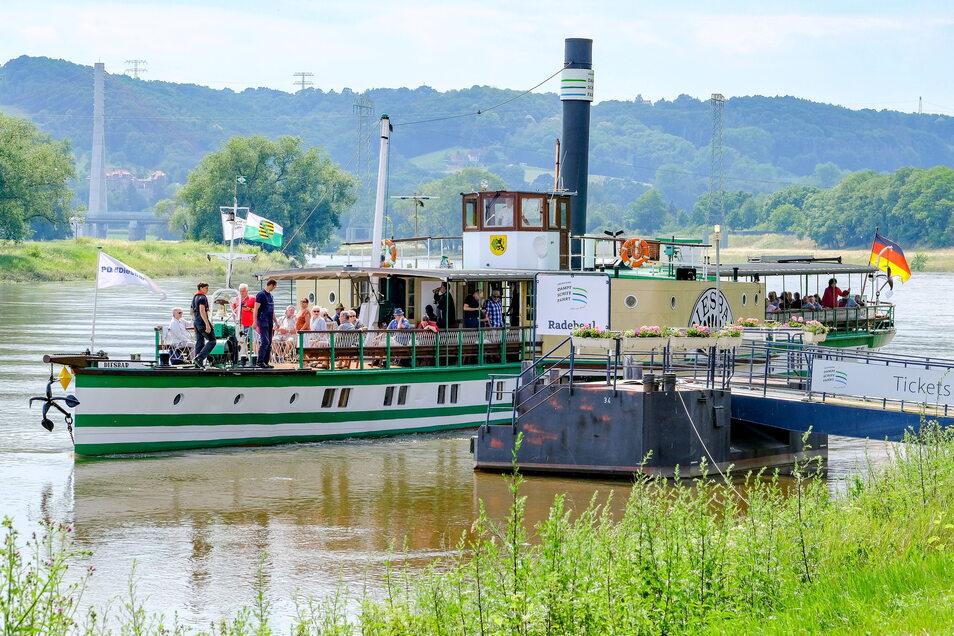 """Im Juni kam der Dampfer """"Diesbar"""" der Sächsischen Dampfschifffahrt nur bis Radebeul. Wegen Niedrigwasser und der drohenden Insolvenz wurde Diesbar-Seußlitz aus dem Fahrplan gestrichen."""