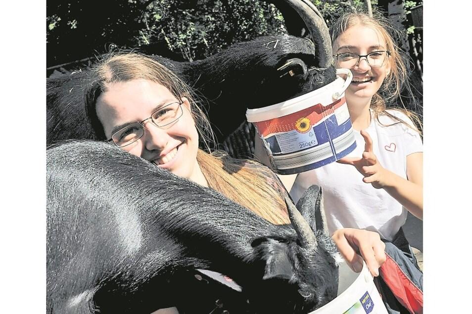 Nicht überall geht es so lustig zu wie bei den Ziegen. Pia Schmidt (li.) und Alida Olluri absolvieren ein Freiwilliges Ökologisches Jahr im Tierpark Weißwasser. Dieser hat wegen der Corona-Allgemeinverfügung seit Anfang November geschlossen.