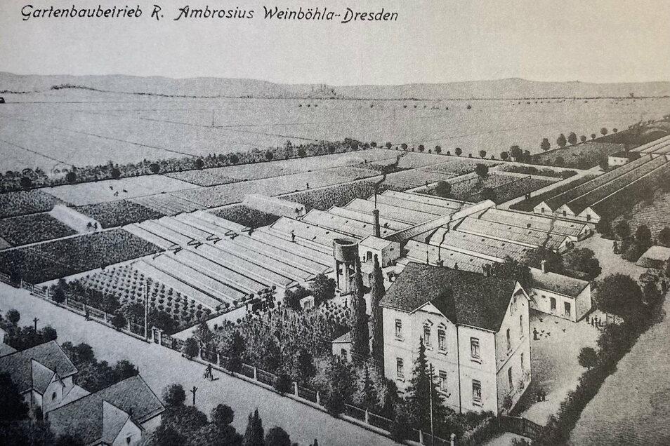 Die historische Ansicht zeigt den Gartenbaubetrieb R. Ambrosius, der auf Azaleen, Eriken und Kamelien spezialisiert war.