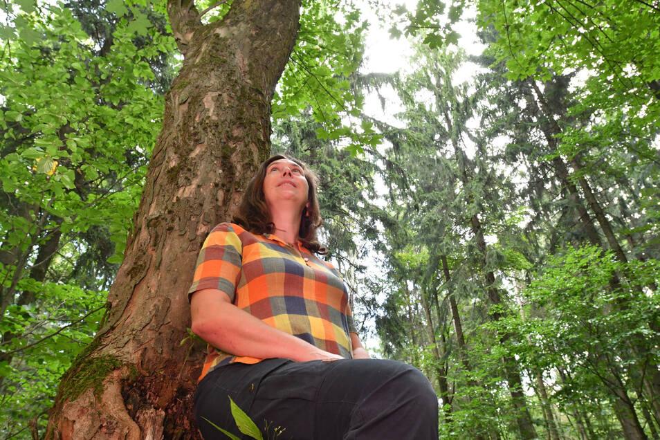 Claudia Scharf ist Diplom-Pädagogin und staatlich zertifizierte Waldpädagogin. Sie geht mit Naturliebhabern regelmäßig zum Waldbaden – wie hier im Hohwald.