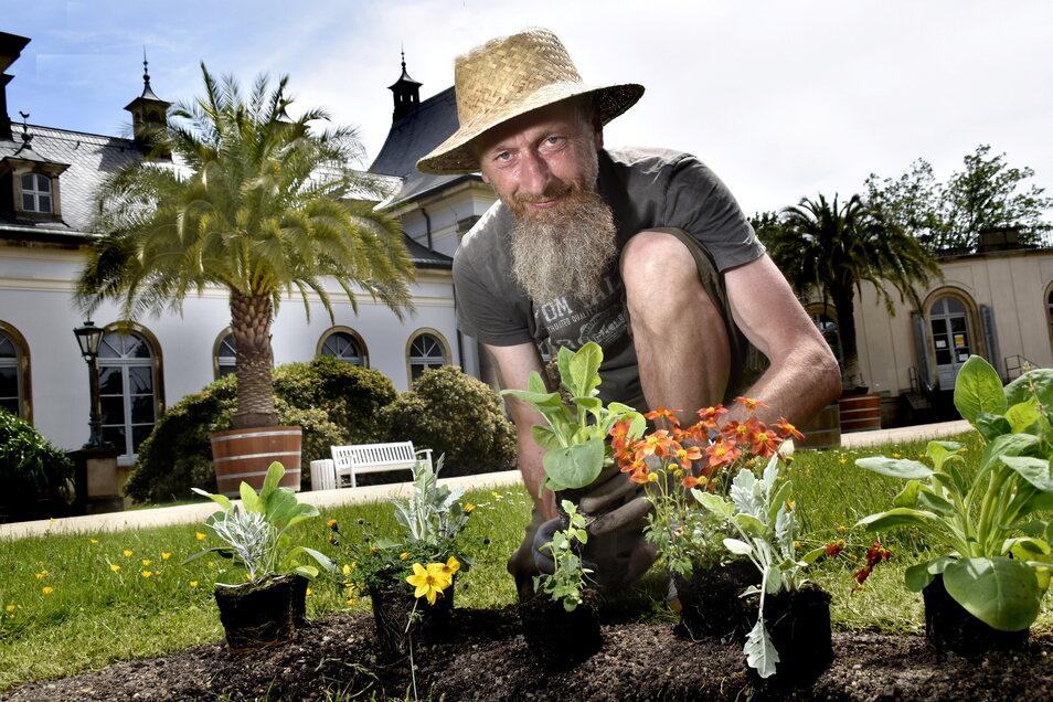 Gärtner Swen Schulz gestaltet mit verschiedensten blühenden Pflanzen wie Ziertabak und Bidens die Rabatten und Beete.
