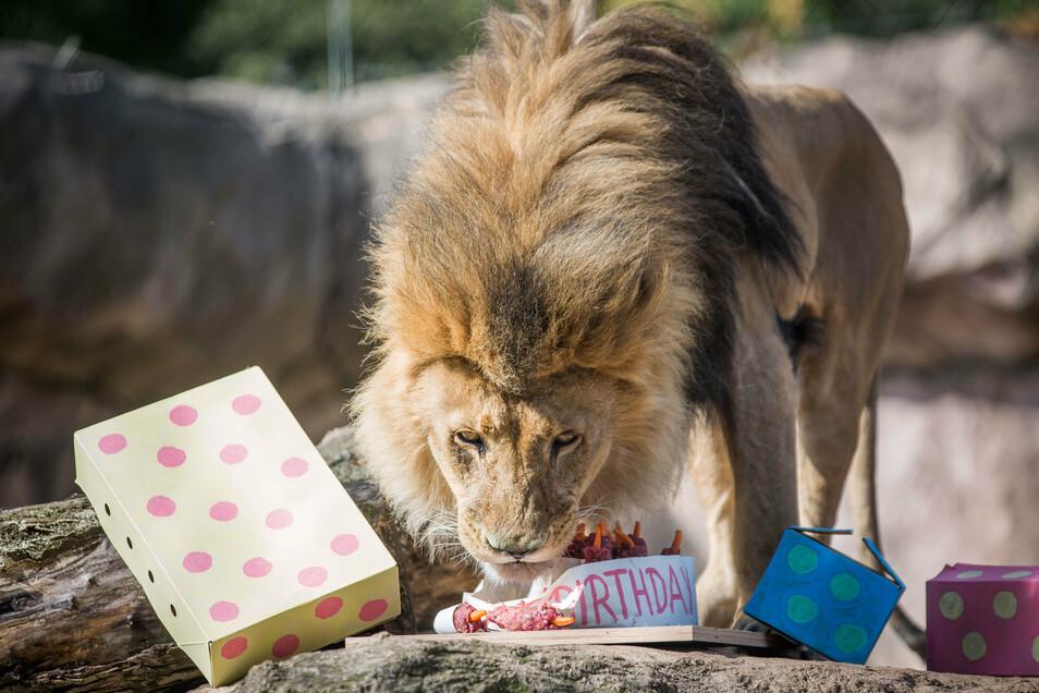 Zum Geburtstag gab es für Jago eine Fleischtorte.