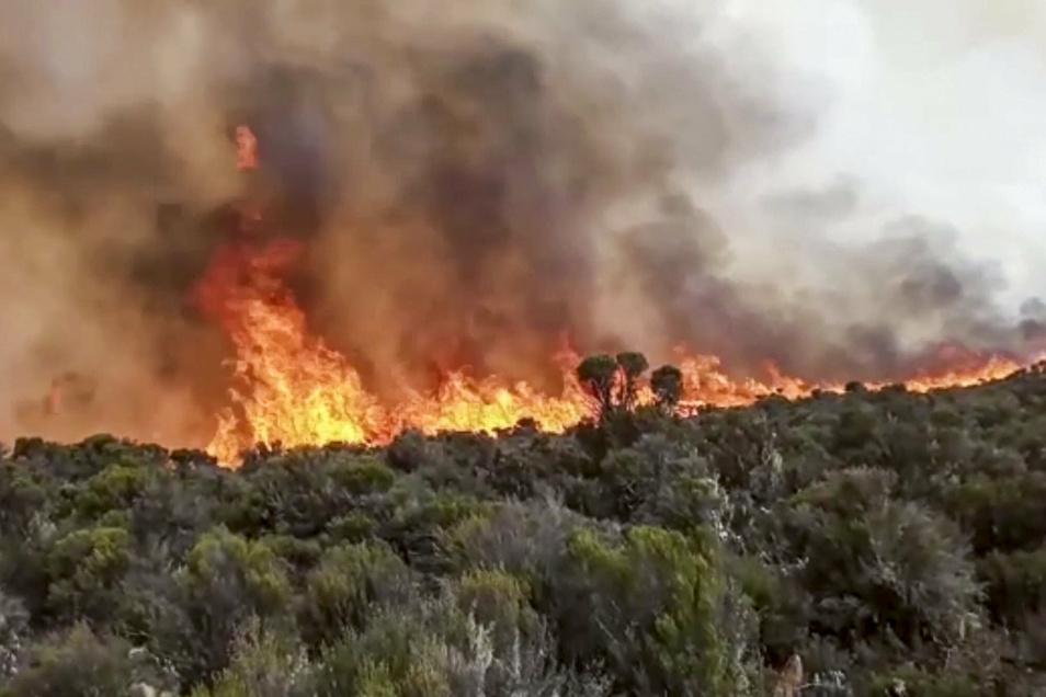 Flammen steigen aus einem Waldstück auf dem Kilimandscharo empor.