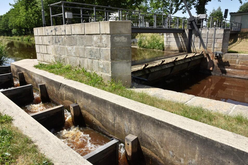 Am Hoyerswerdaer Hauptwehr fließt das Wasser der Schwarzen Elster seit dem Wochenende nicht mehr über die Fischbauchklappe, sondern nur noch durch die Fischtreppe. Der Elster-Altlauf wird ebenfalls noch bedient.