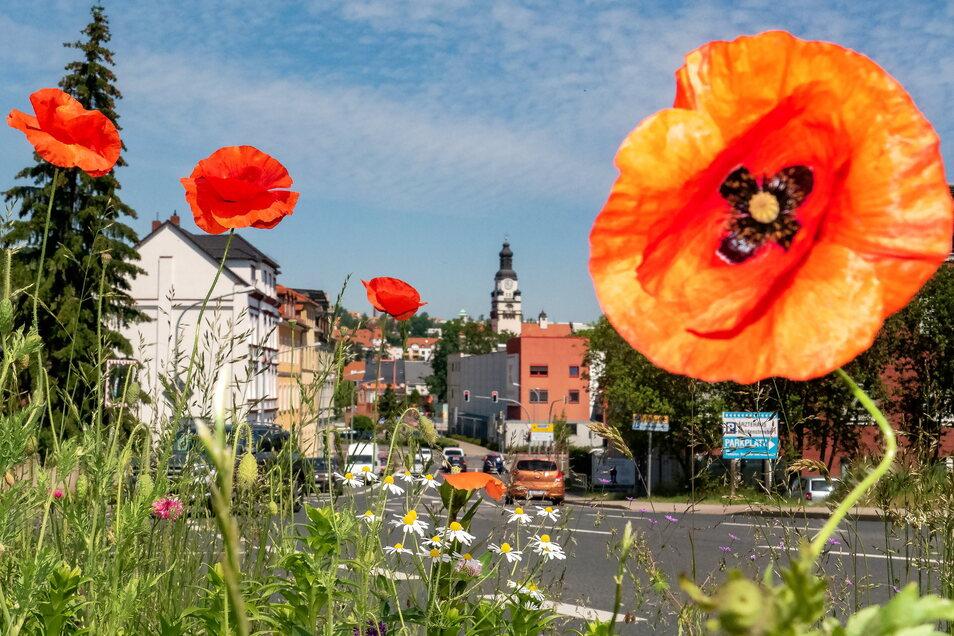 Eine Bienen- und zugleich Augenweide haben die Döbelner Stadtgärtner an der Roßweiner Straße angelegt.