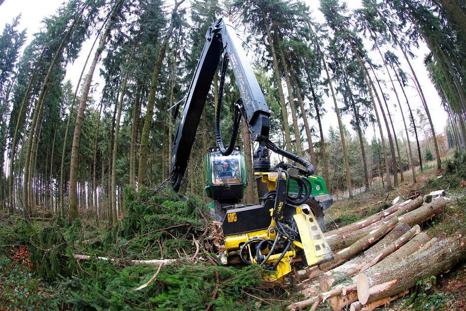 Bisher musste abgeholzt werden - jetzt will Löbau wieder aufforsten.