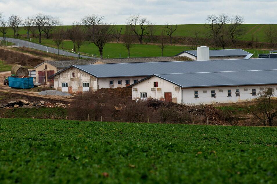Statt Schweine stehen jetzt Ferkel in den Ställen der Stolpen Agro GmbH.