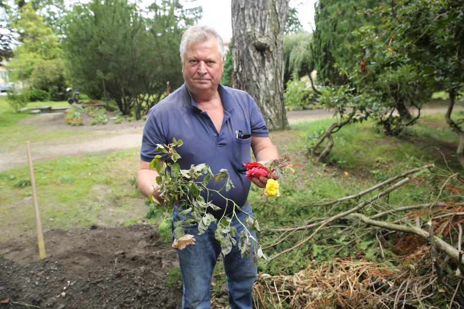 Im Pulsnitzer Stadtpark haben Unbekannte gewütet und unter anderem diverse Blumen zerstört. Guntram Schäfer, der sich mit seiner Frau ehrenamtlich um das Gelände kümmert, ist entsetzt.