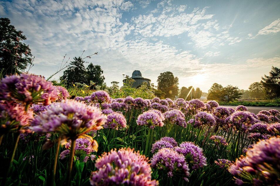 Ein wichtiger Standort für die Bundesgartenschau 2021 ist das Erfurter Garten- und Ausstellungs-Gelände (ega).