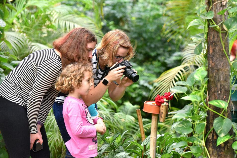Immer mehr Familien besuchen das Schmetterlingshaus in Jonsdorf.