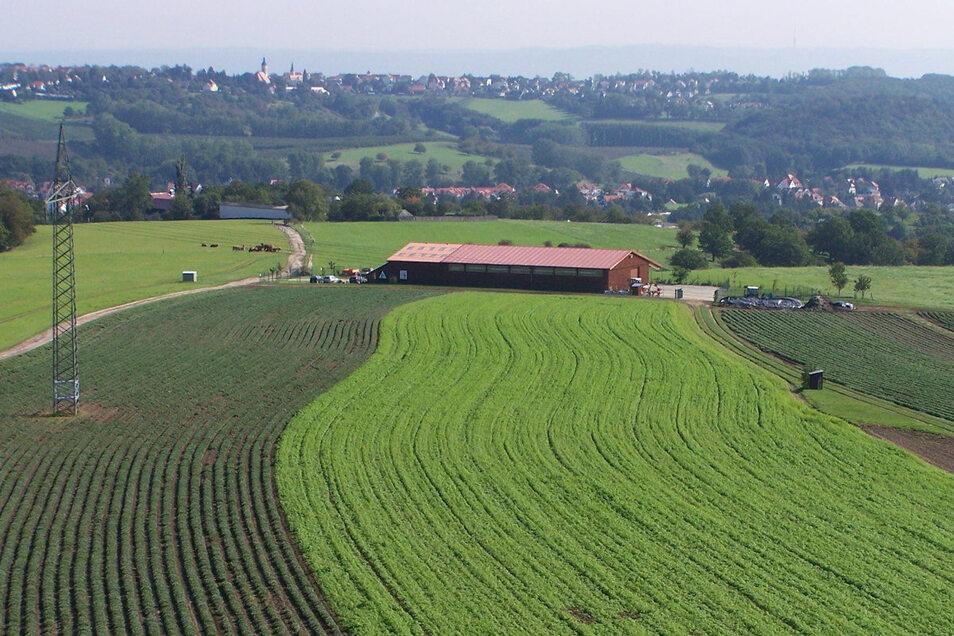 Salbeifelder der Firma Bombastus in Freital