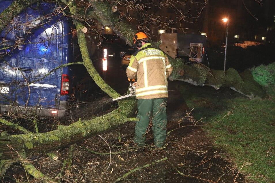 Die Dresdner Feuerwehr musste am Montagmorgen viele Bäume von Straßen, Autos und Häusern räumen.